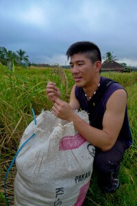 Meeting local rice farmers during their harvest