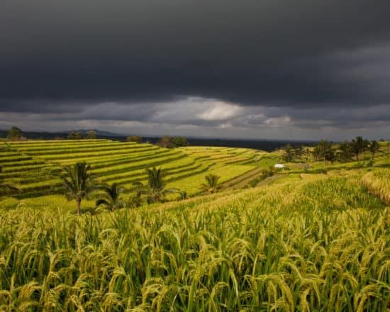 Storm Coming Over Rice Paddies of Jatiluwih in Bali