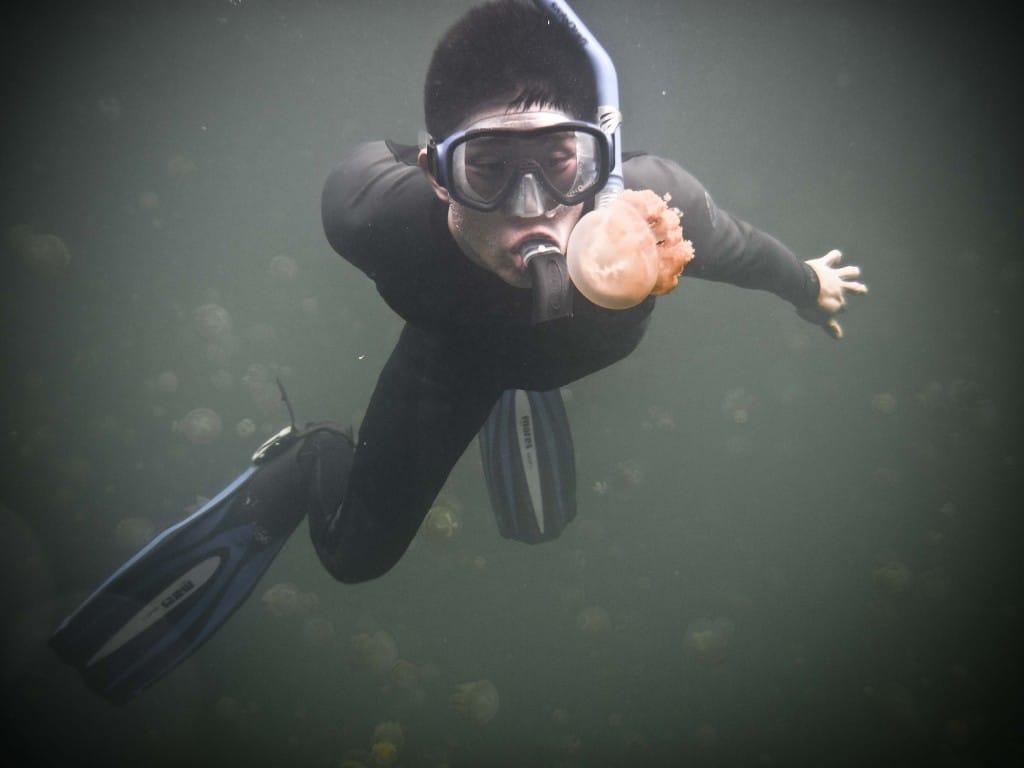 palau travel guide jellyfish lake