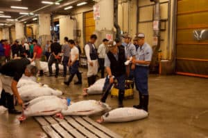tsukiji fish market tuna auction in progress