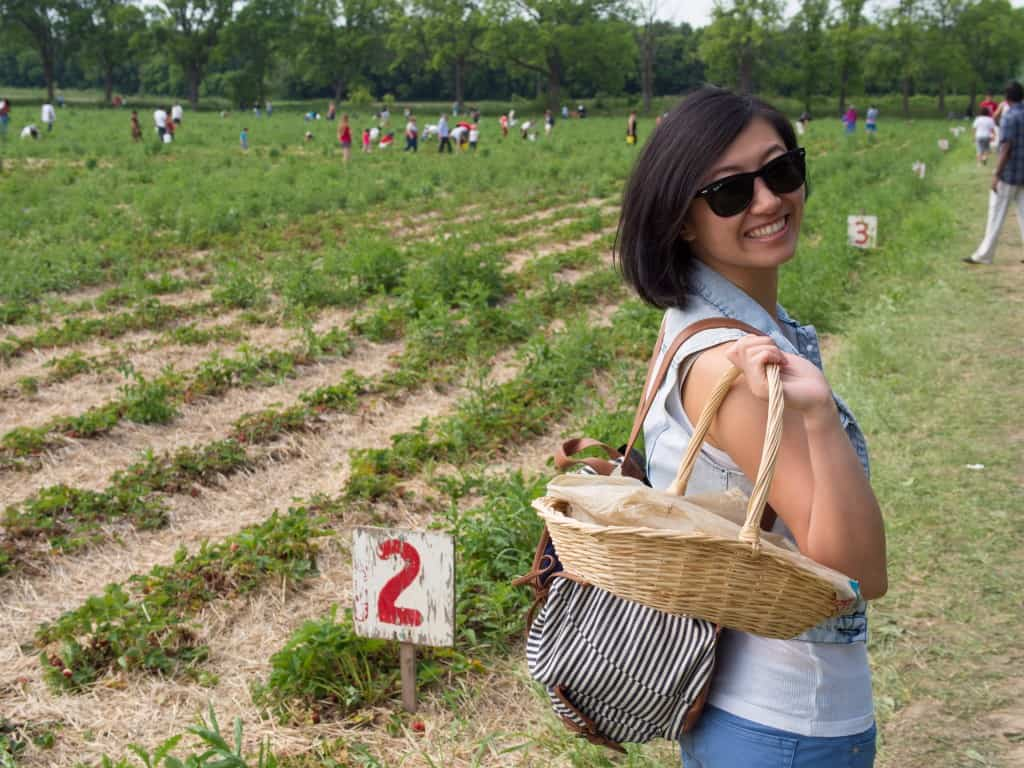 strawberry picking at whittamore's farm in things to do in toronto