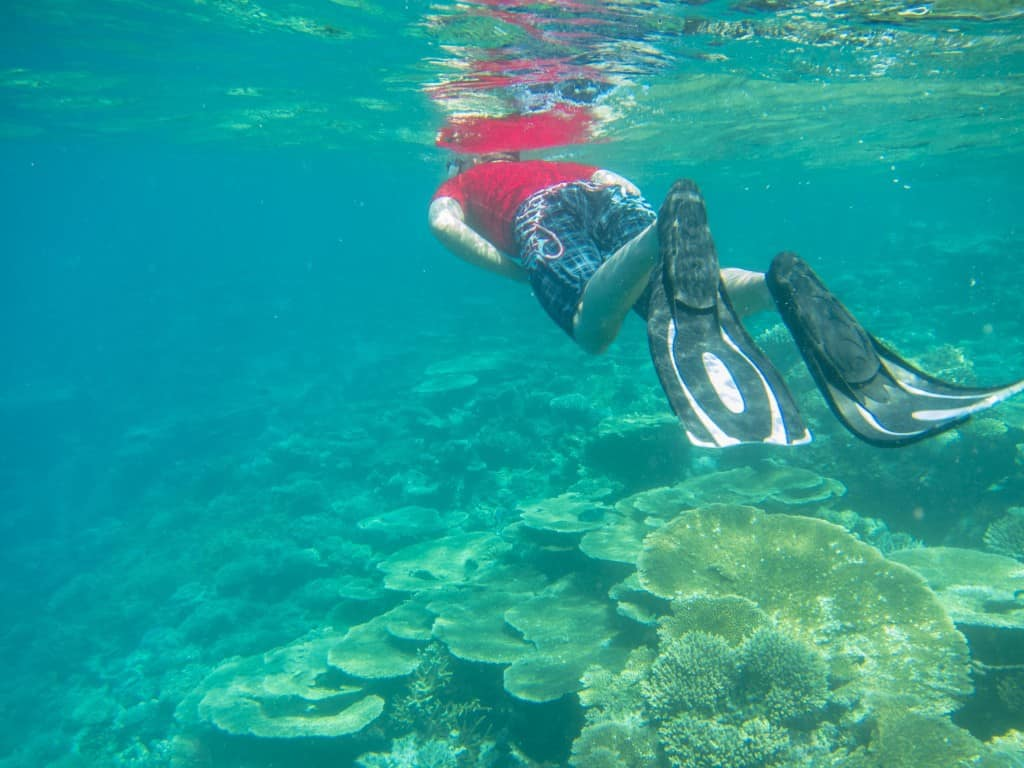 Exploring the house reef.