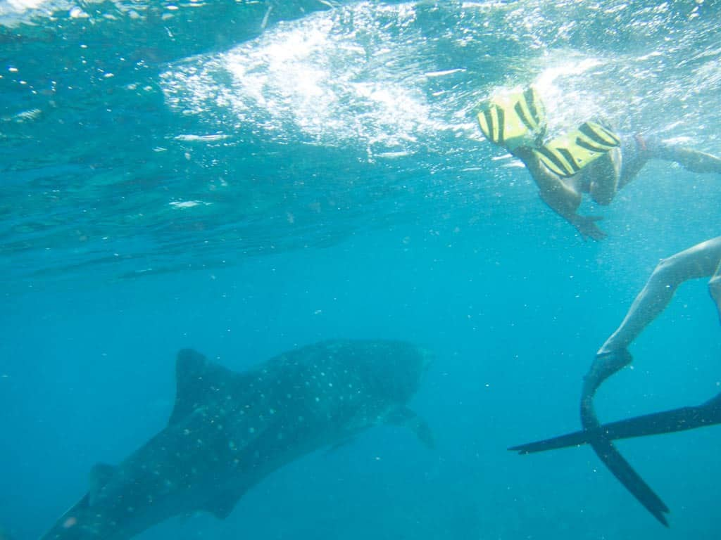It was so hard to take steady photos down there as you were bobbing up and down with the waves and trying to swim hard to keep up with the whale shark.