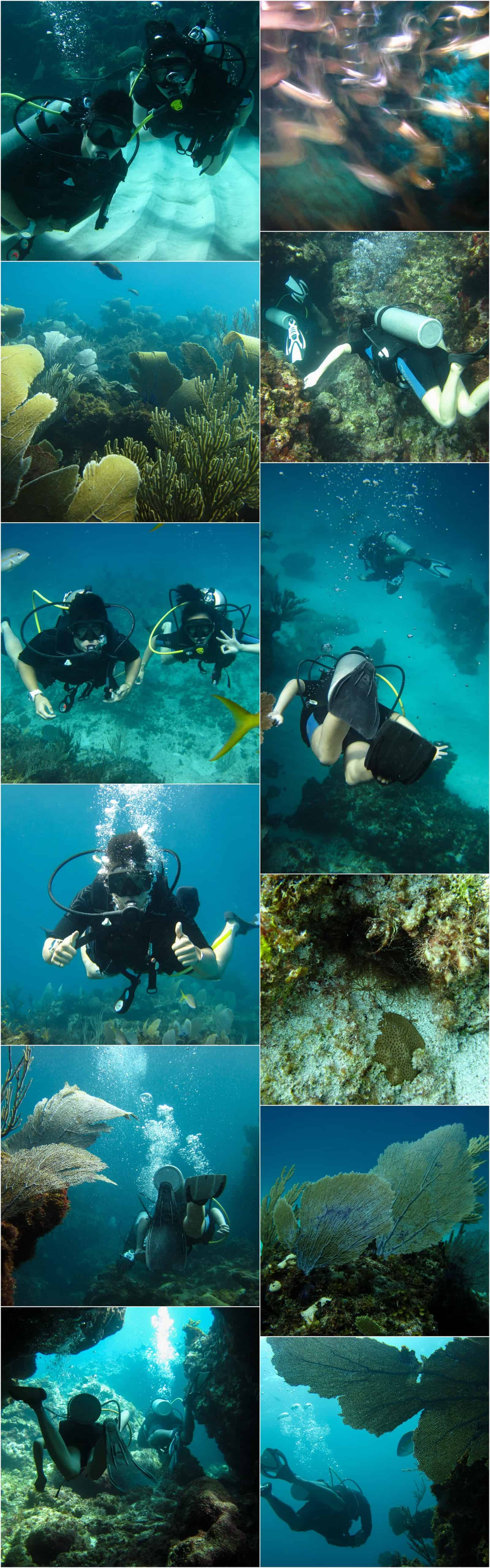 channel dive site with seapro divers mosaic of photos from the experience