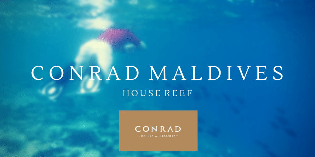 Conrad Maldives – The Amazing House Reef Snorkelling