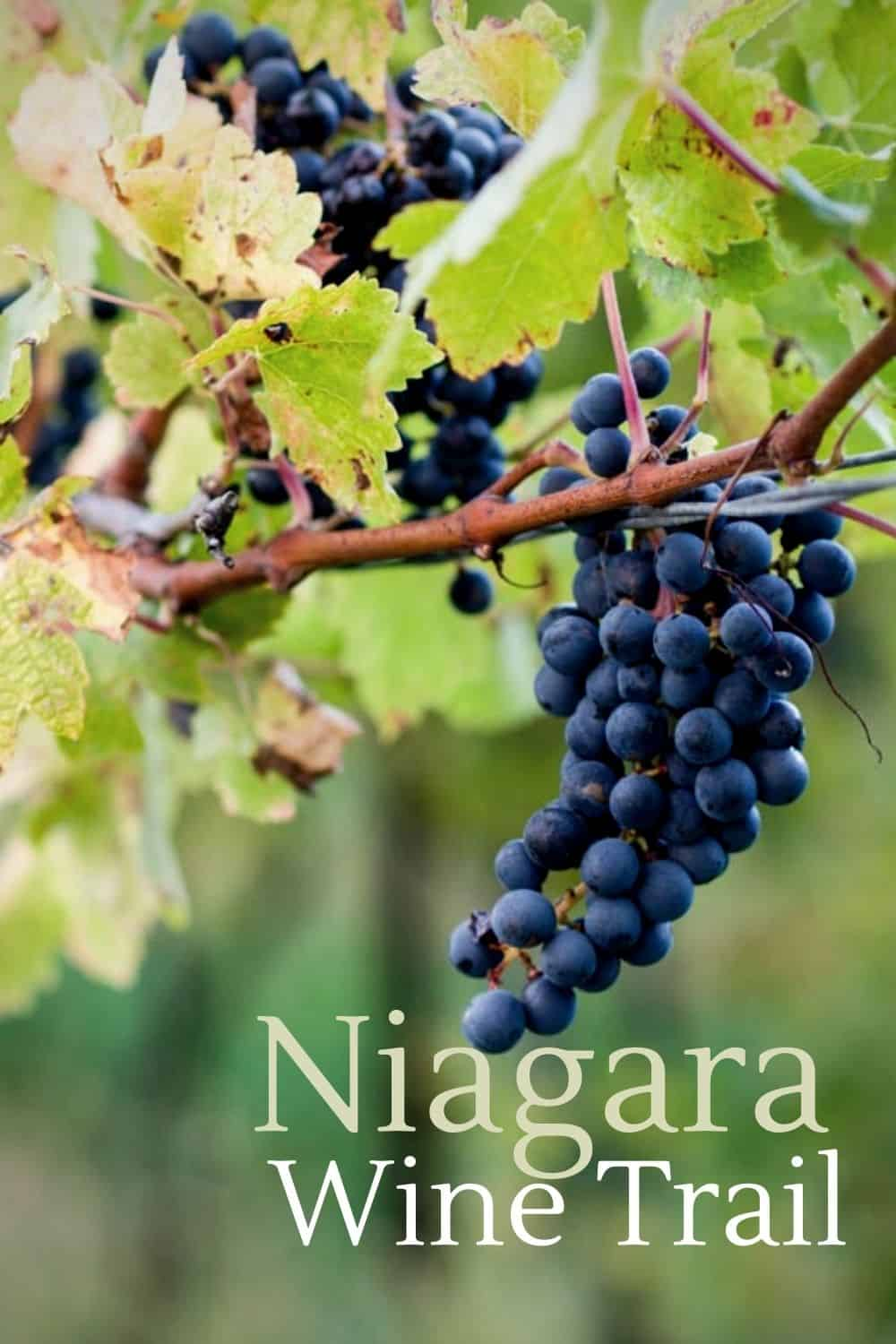3 Wineries to Visit on the Niagara Wine Trail