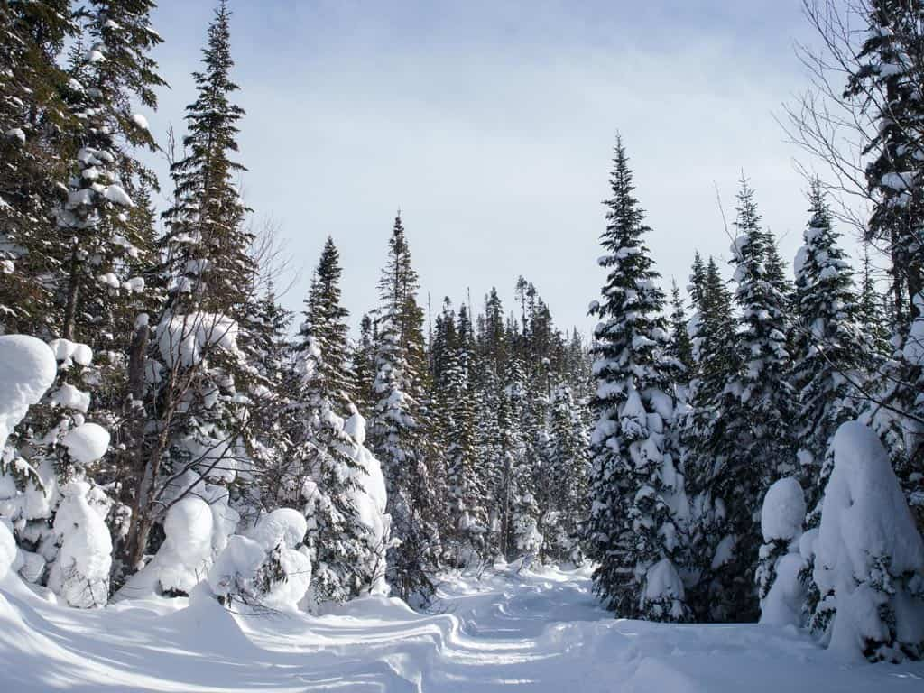 Valley of the Ghosts Snowshoe Views