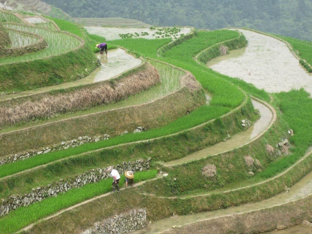 Longshen rice terraces near Guilin