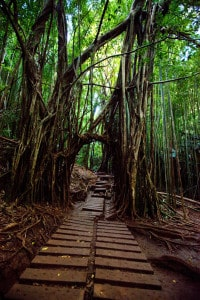 jungle trails of manoa falls is one of the best hikes near honolulu