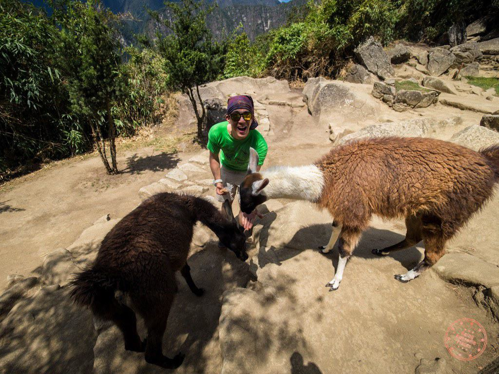 At the bottom where Chantelle was waiting for us, there were a bunch of llamas vying for our granola bars.