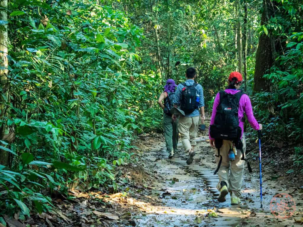 walking path to refugio amazonas jungle lodge