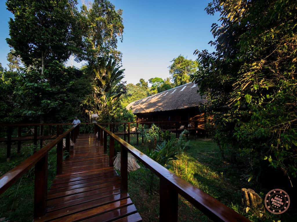 refugio amazonas suites in the middle of the peruvian amazon jungle forest