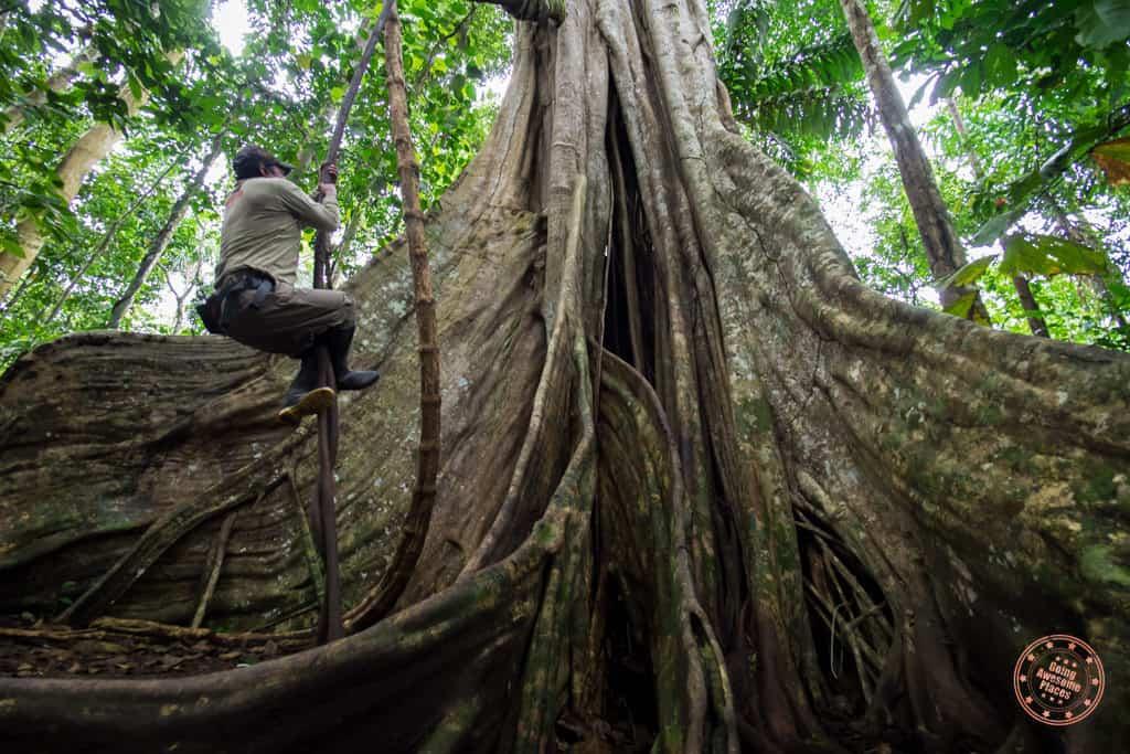 Amazon Rainforest Giant Trees