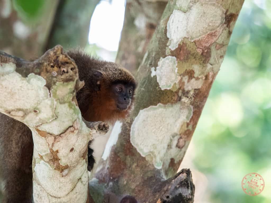 Monkeys of the Rainforest