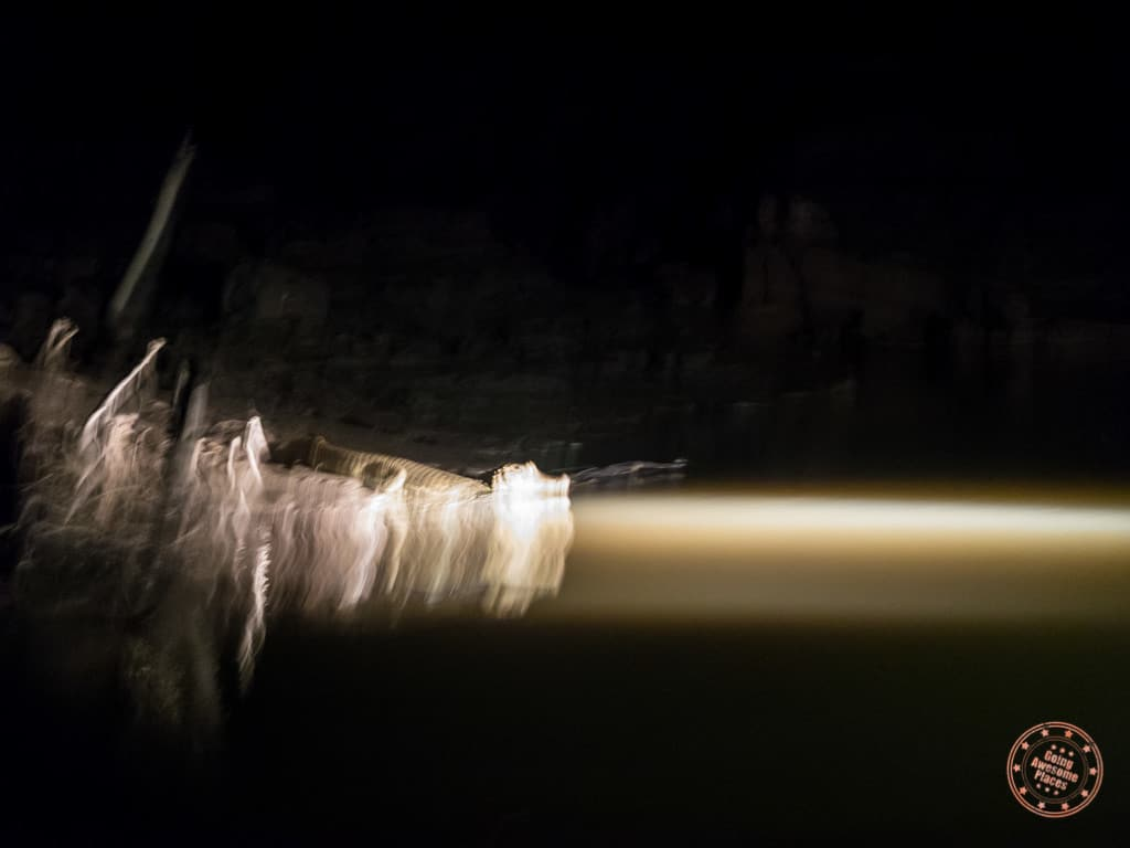 Impossible to take photos in this light but this is one of the baby caiman we spotted on our night boat ride.