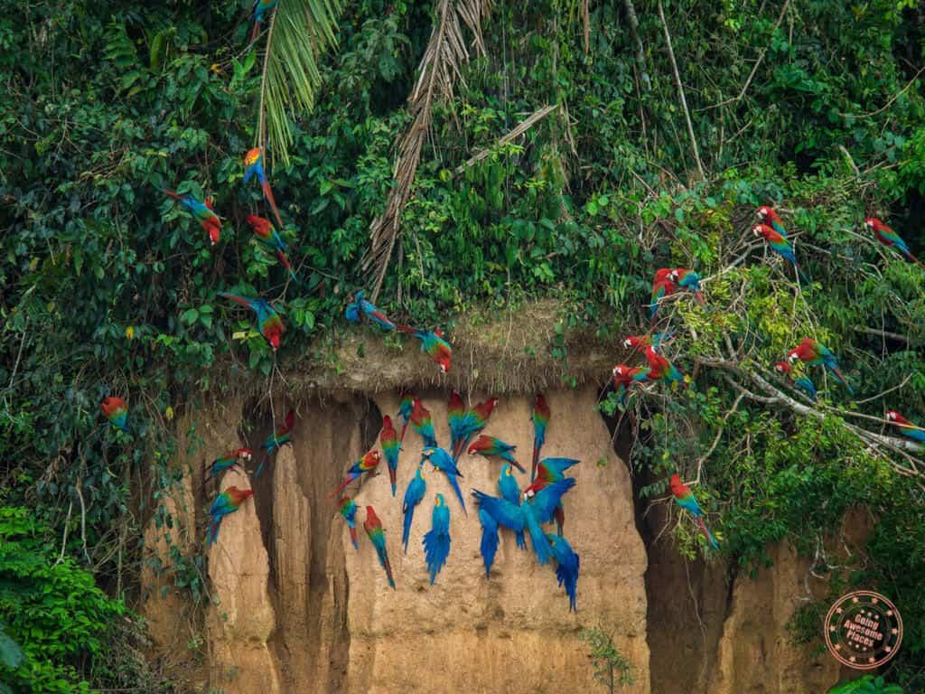 peru amazon clay lick exdperience at refugio amazonas
