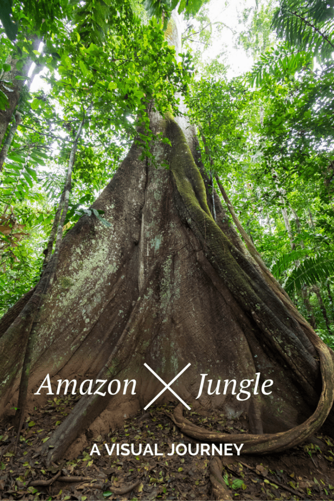 A visual journey through the Amazon Jungle.