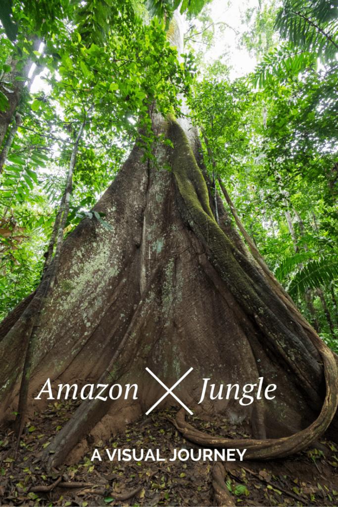 A visual journey through the Amazon Jungle.