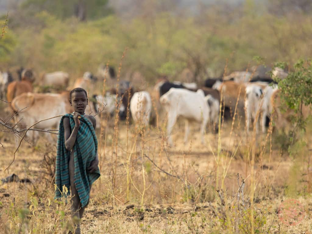 At the crack of dawn, men of the village including the children start their daily routines. Kids get trained early to herd cattle as they make their way out to graze.