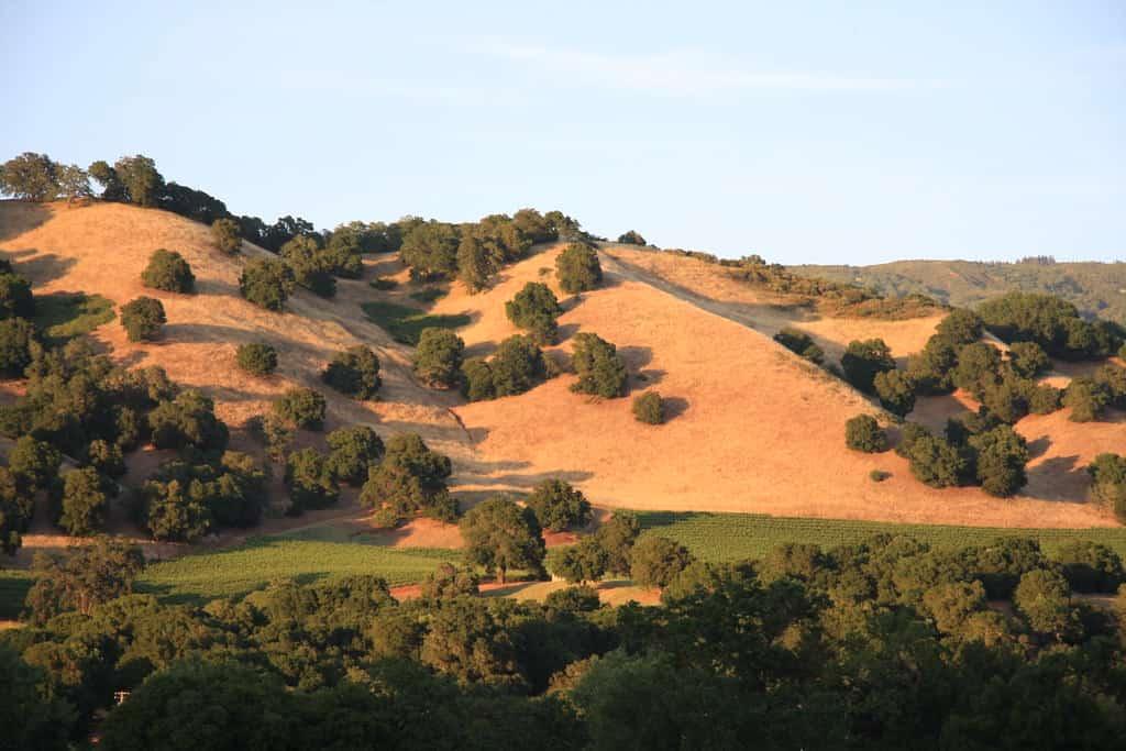 sonoma california rolling hills