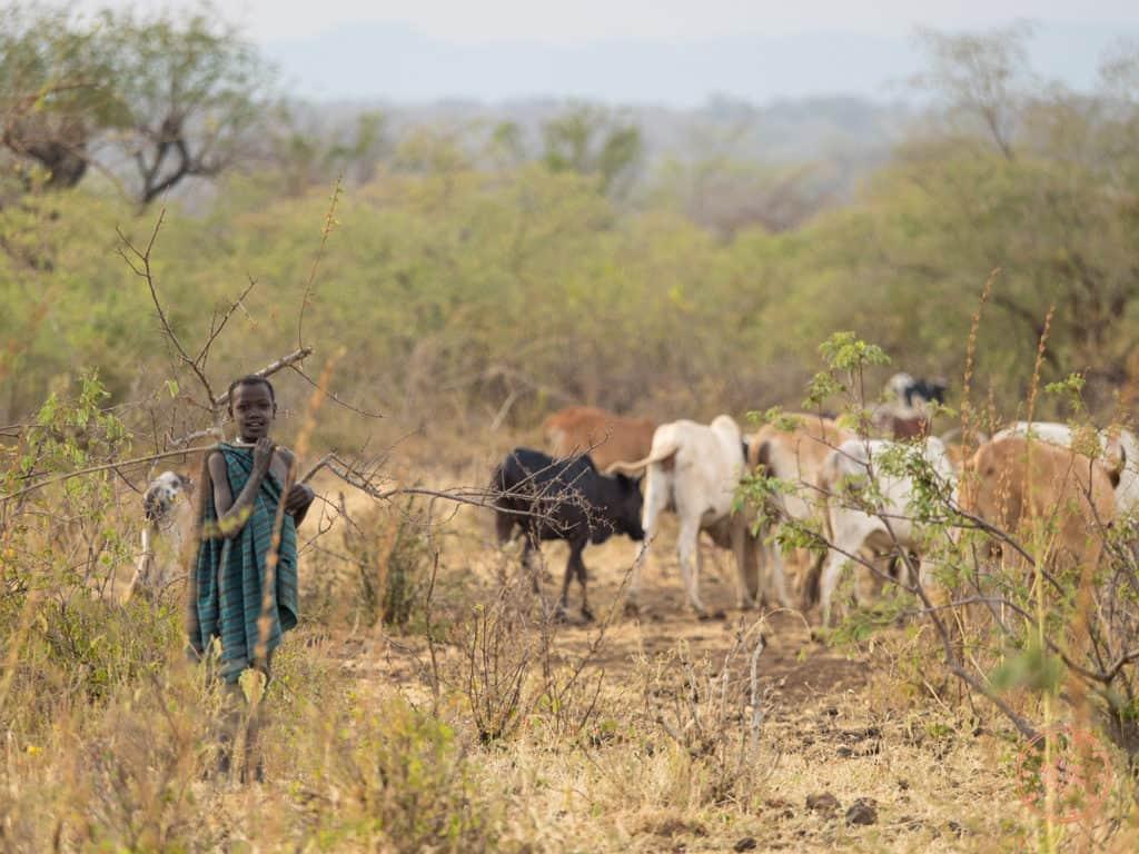 Children of Mursi Tending To The Cattle