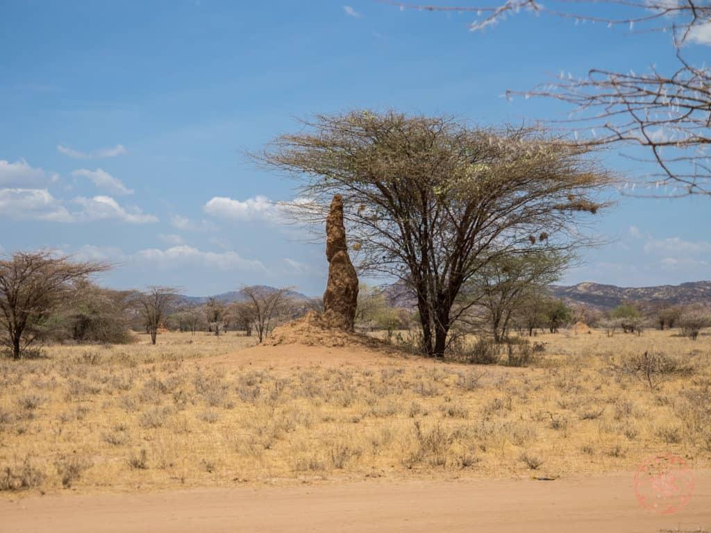 Termite Tower in Ethiopia Omo Valley