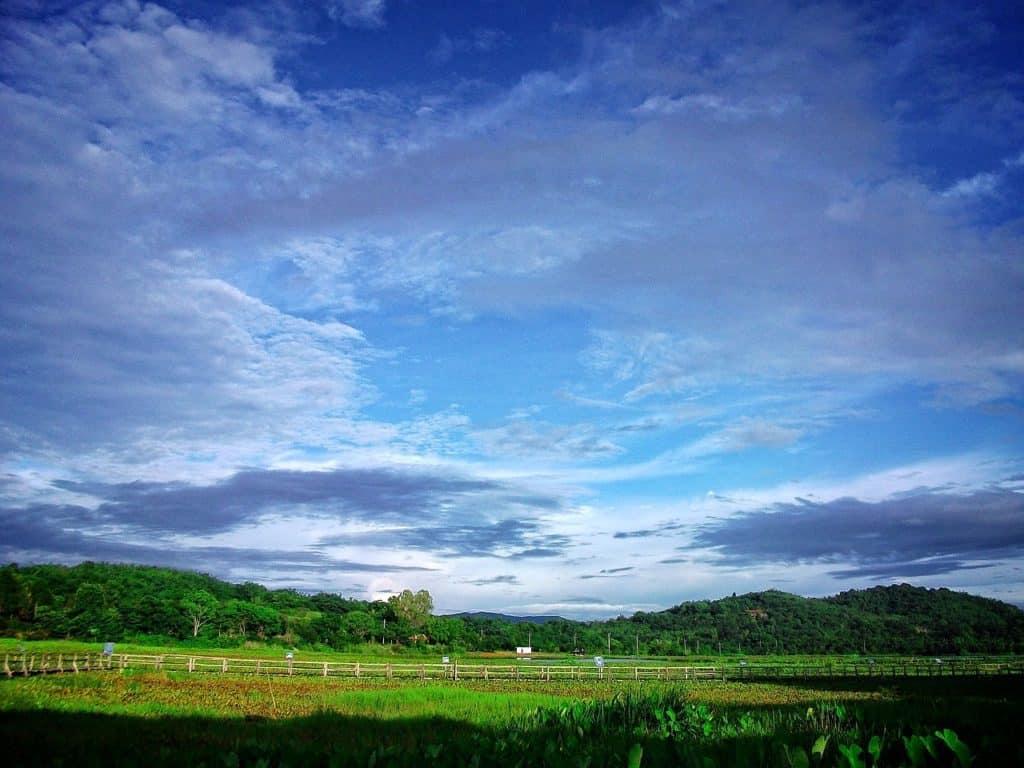 Chaing Rai Farm