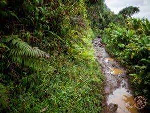 Kalalau Trail Conditions