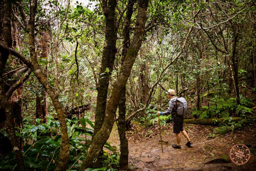 Peak Design Everyday Backpack 30L Ash Gray In Hawaii Hiking