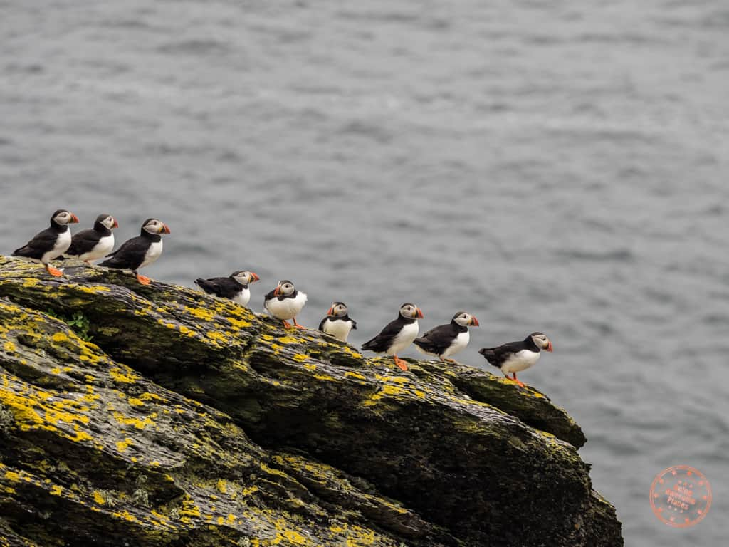 Puffins On The Edge