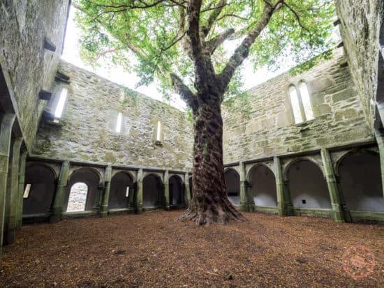 Muckross Abbey Courtyard