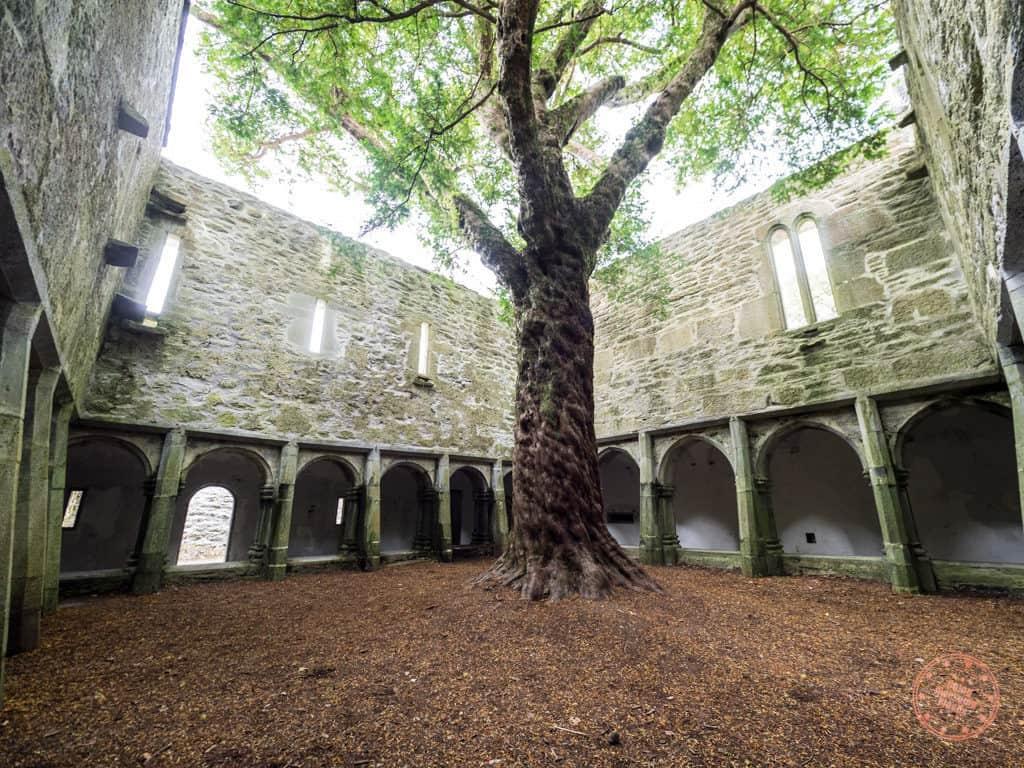 Inside the Elven-Like Courtyard of Muckross Abbey in Killarney National Park