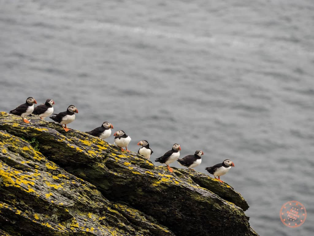 9 puffins at Skellig Michael