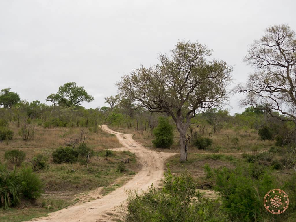 sabi sands terrain with elephant plains - what is it like to safari in south africa