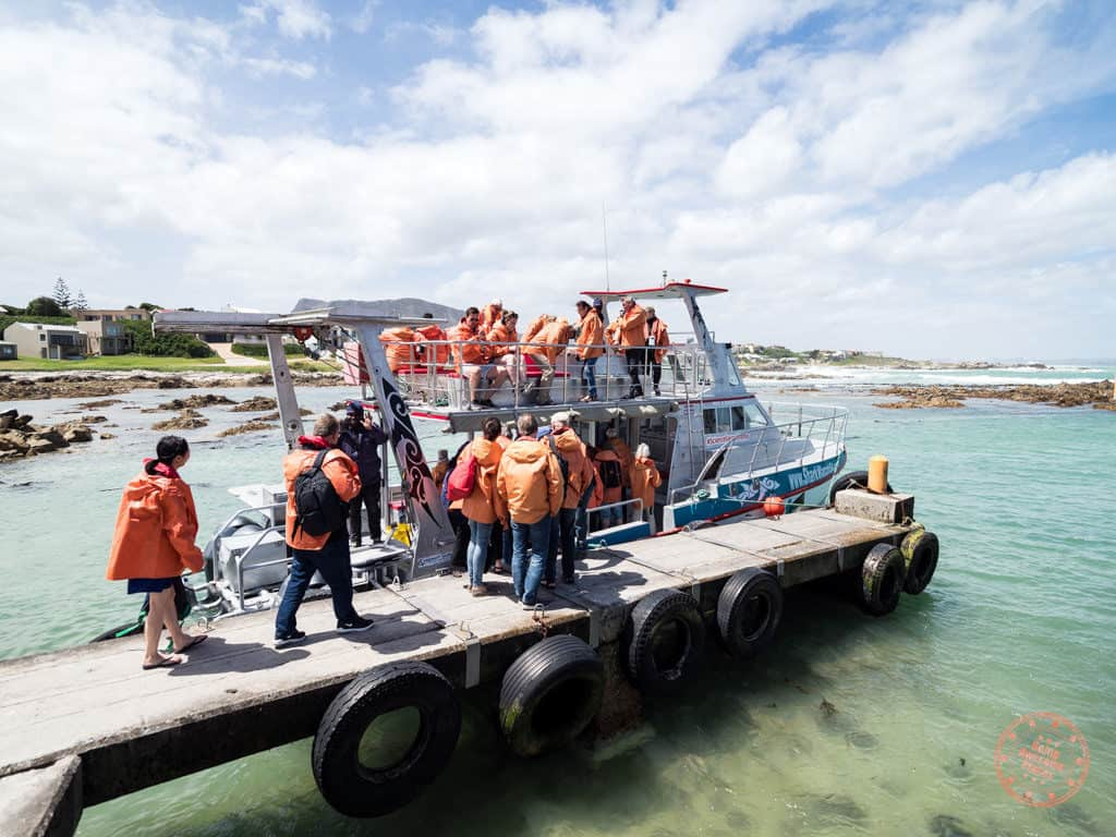 boarding the marine dynamics slashfin for shark cage diving in gaansbai