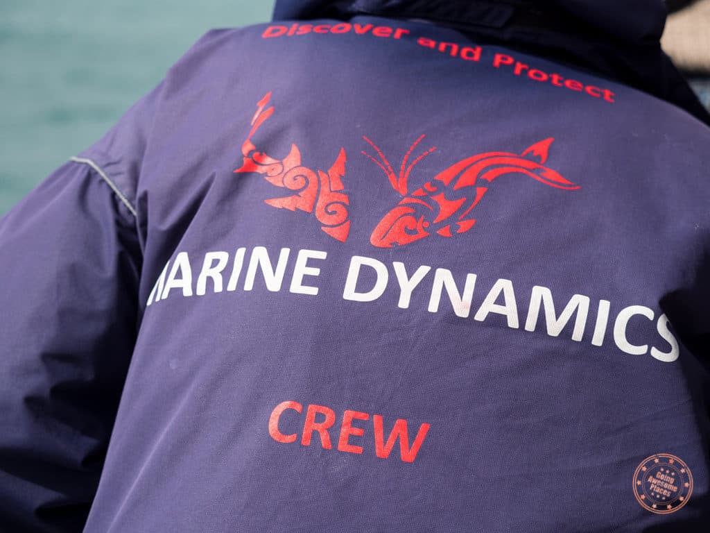 The awesome crew of Marine Dynamics