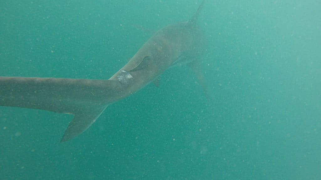 shark cage diving in gaansbai with marine dynamics