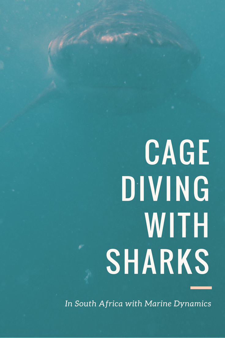 Once in a Lifetime Chance Shark Cage Diving in Gaansbai with Marine Dynamics