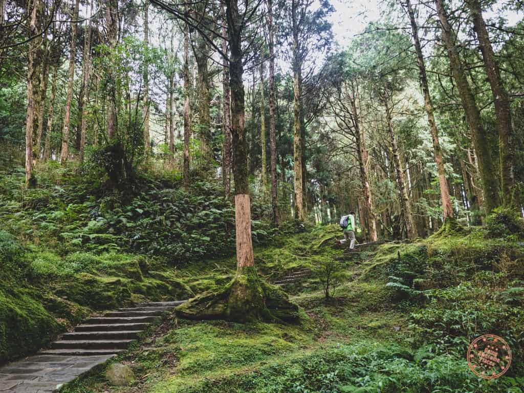 Hiking Alishan Forest Trail