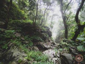 Jungle Like Hiking In Taroko