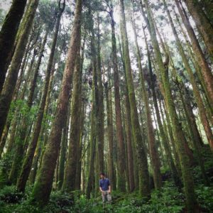 Standing amongst ancient trees of Alishan Forest in Taiwan