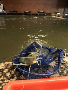 Prawn Fishing Catch