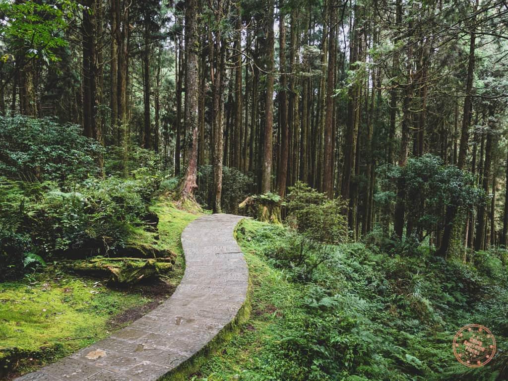 Alishan Forest Trail Path