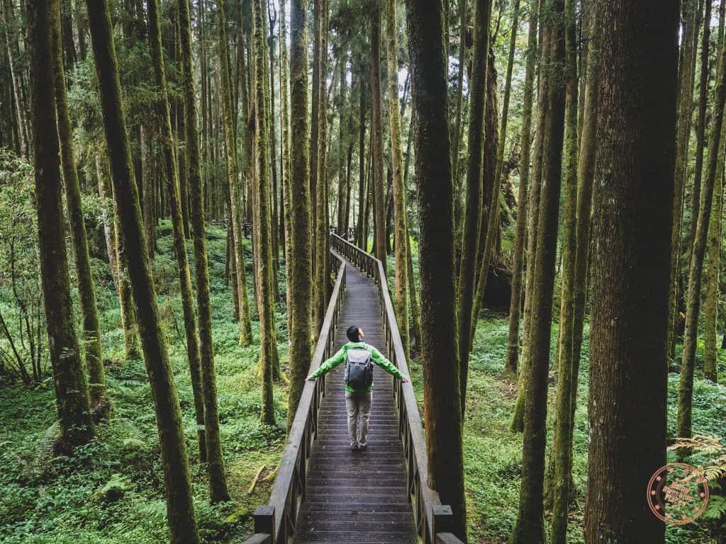 Alishan Travel Guide Taiwan - Forest Trail Boardwalk