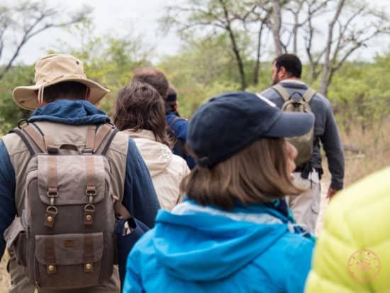 bushwalk with the group at elephant plains
