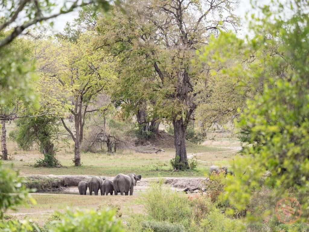 elephants around the watering hole at Elephant Plains
