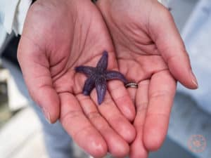 micro purple starfish