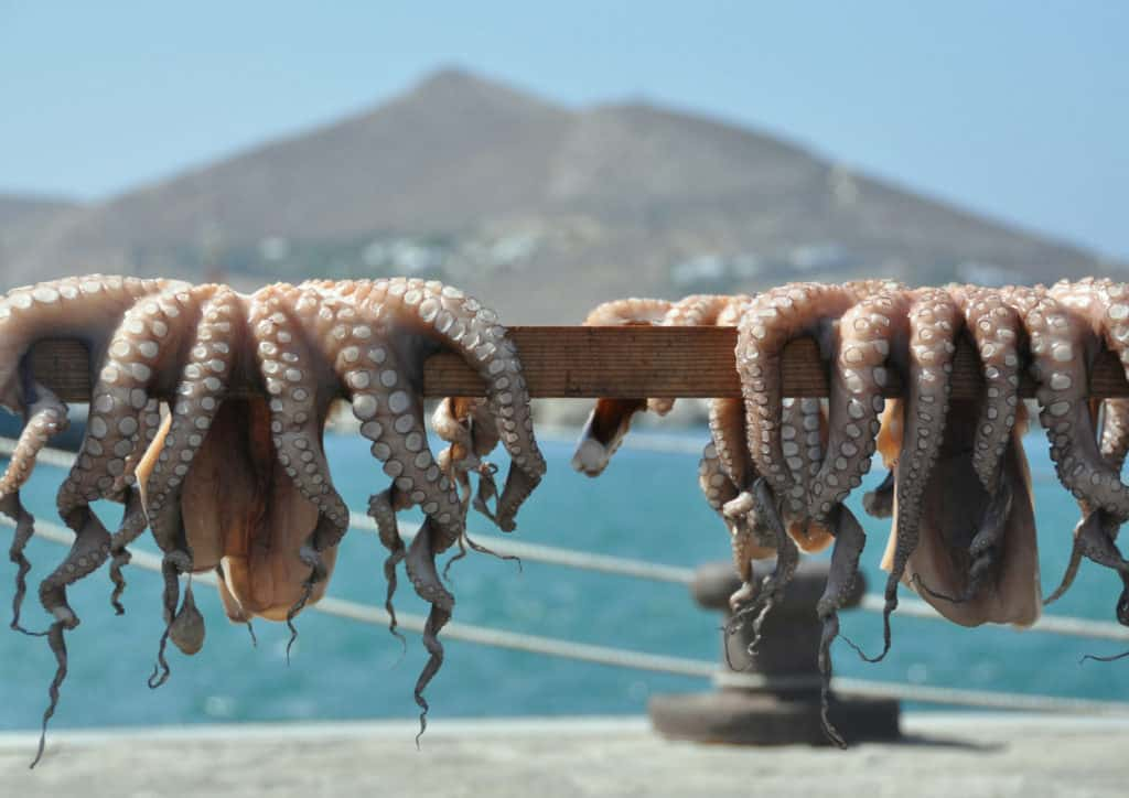 fresh octopus on greek islands
