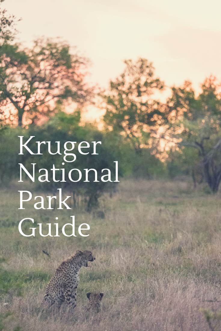 Kruger National Park Guide For First Timers -  Everything You Need To Know