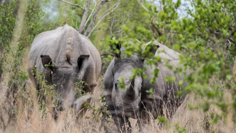 south africa safari guide to kruger national park and private reserves